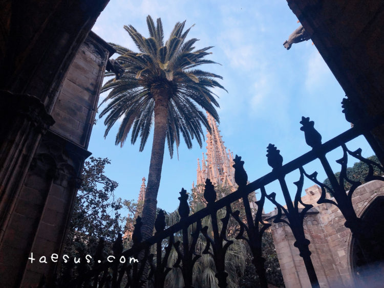 中庭 サンタ・エウラリア大聖堂